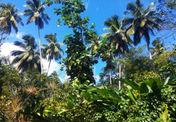 Karibik – die Crew geht an Land